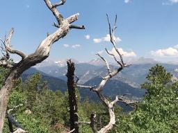 Dead Trees Rockies